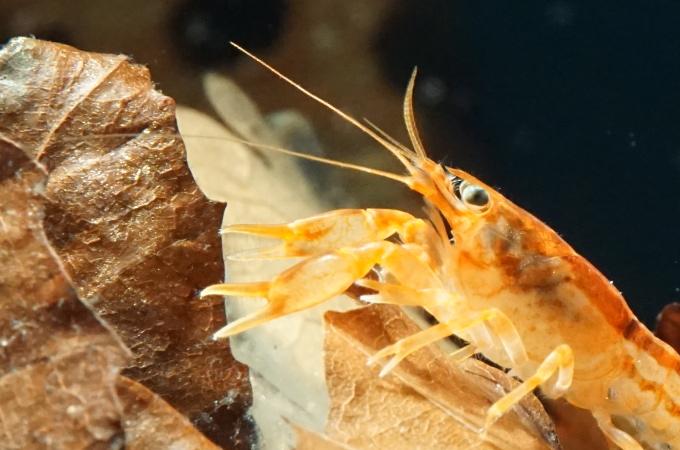 shrimpkeller